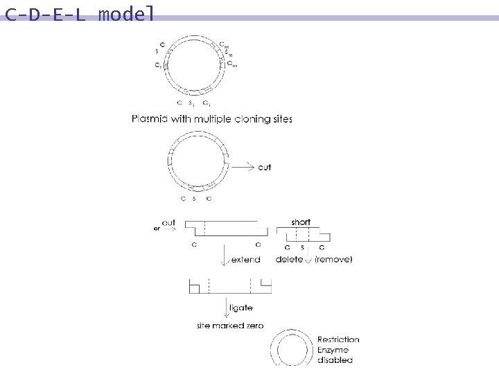C-D-E-L model