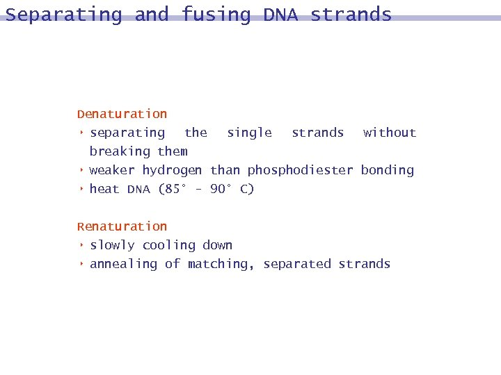 Separating and fusing DNA strands Denaturation 8 separating 8 8 the single strands without