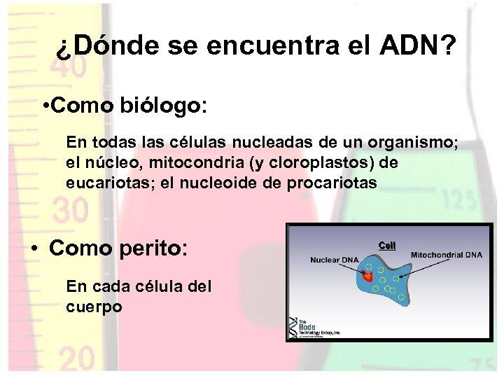 ¿Dónde se encuentra el ADN? • Como biólogo: En todas las células nucleadas de