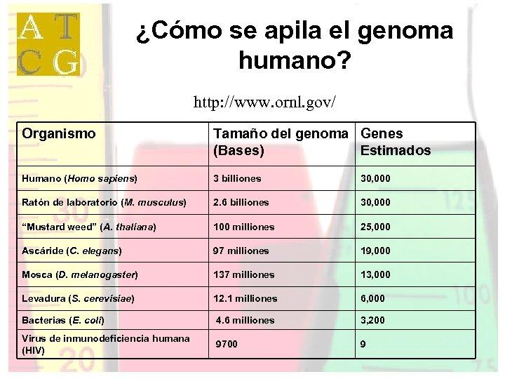 ¿Cómo se apila el genoma humano? http: //www. ornl. gov/ Organismo Tamaño del genoma