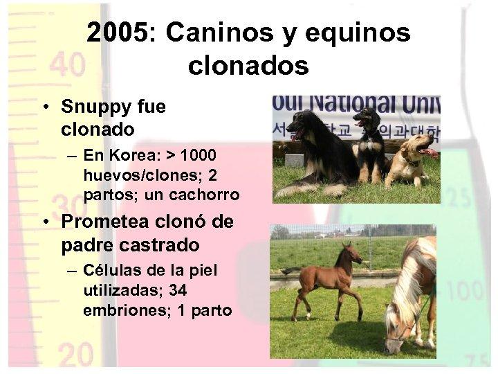 2005: Caninos y equinos clonados • Snuppy fue clonado – En Korea: > 1000