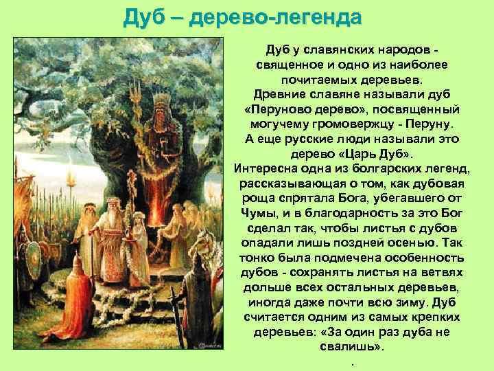 Дуб – дерево-легенда Дуб у славянских народов - священное и одно из наиболее почитаемых