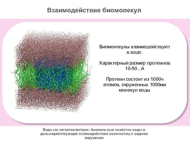 Взаимодействие биомолекул Биомолекулы взаимодействуют в воде. Характерный размер протеинов 10 -50. . . А