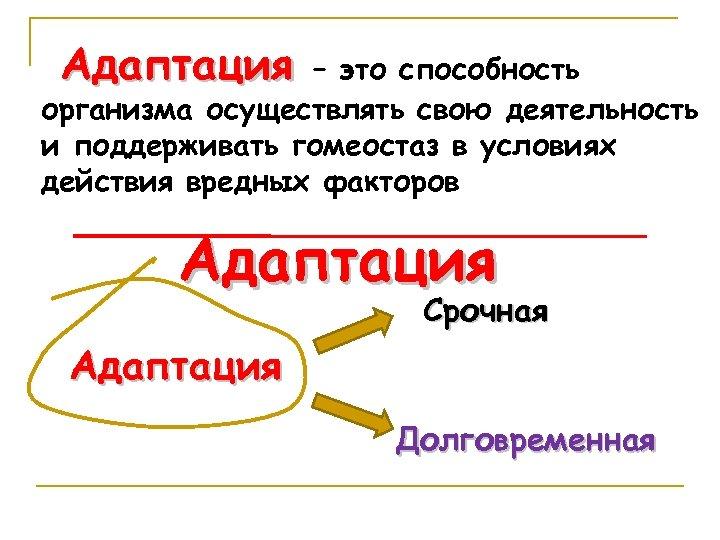 Адаптация – это способность организма осуществлять свою деятельность и поддерживать гомеостаз в условиях действия
