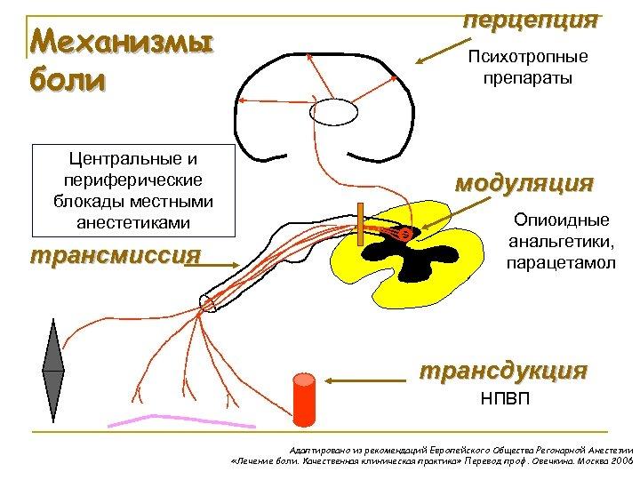 Механизмы боли Центральные и периферические блокады местными анестетиками трансмиссия перцепция Психотропные препараты модуляция Опиоидные