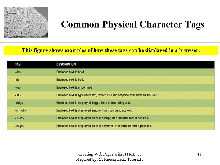 XP Common Physical Character Tags This figure shows examples of how these tags can