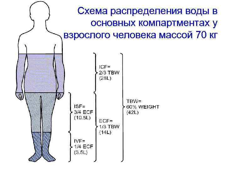Схема распределения воды в основных компартментах у взрослого человека массой 70 кг