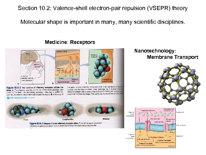 Section 10. 2: Valence-shell electron-pair repulsion (VSEPR) theory Molecular shape is important in many,