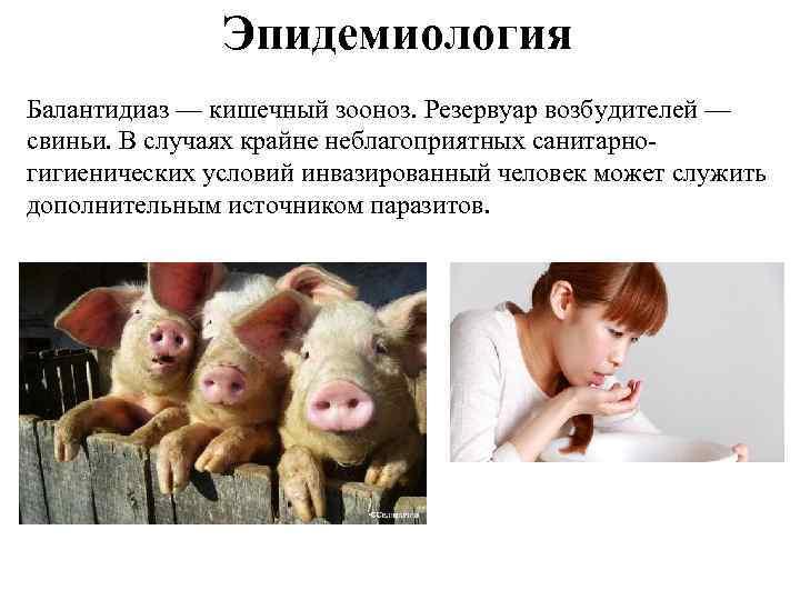 Эпидемиология Балантидиаз — кишечный зооноз. Резервуар возбудителей — свиньи. В случаях крайне неблагоприятных санитарногигиенических