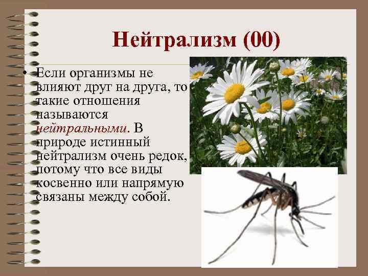 Нейтрализм (00) • Если организмы не влияют друг на друга, то такие отношения называются