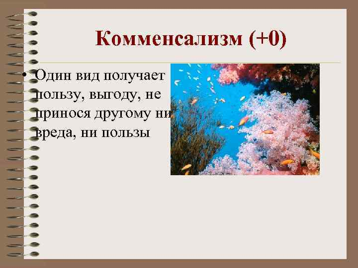 Комменсализм (+0) • Один вид получает пользу, выгоду, не принося другому ни вреда, ни
