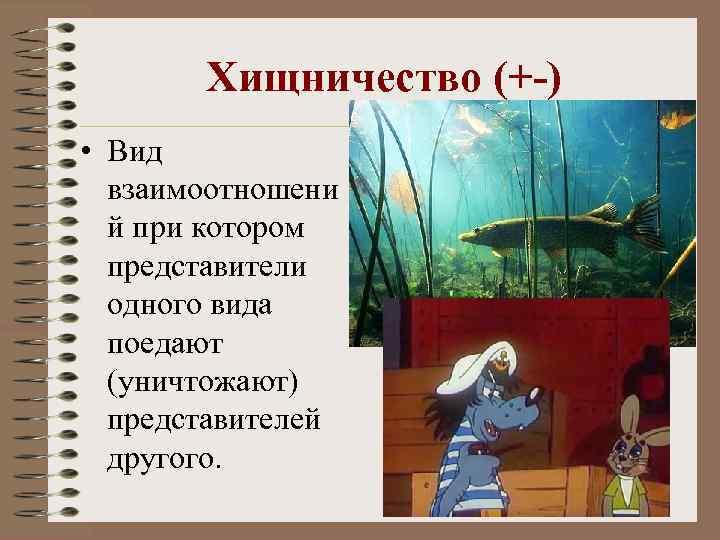Хищничество (+-) • Вид взаимоотношени й при котором представители одного вида поедают (уничтожают) представителей