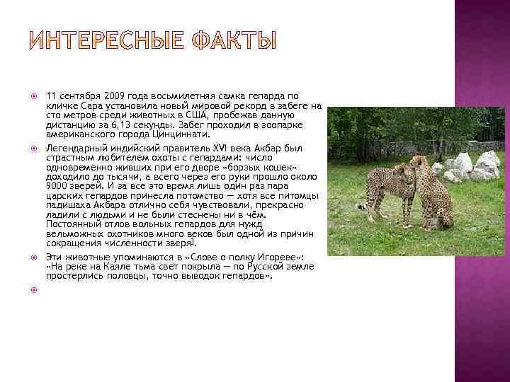 11 сентября 2009 года восьмилетняя самка гепарда по кличке Сара установила новый мировой