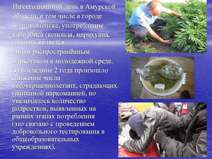На сегодняшний день в Амурской области, в том числе в городе Благовещенске, употребление каннабиса