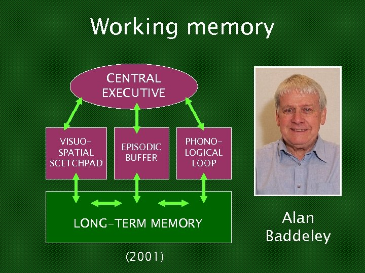 Working memory CENTRAL EXECUTIVE VISUOSPATIAL SCETCHPAD EPISODIC BUFFER PHONOLOGICAL LOOP LONG-TERM MEMORY (2001) Alan