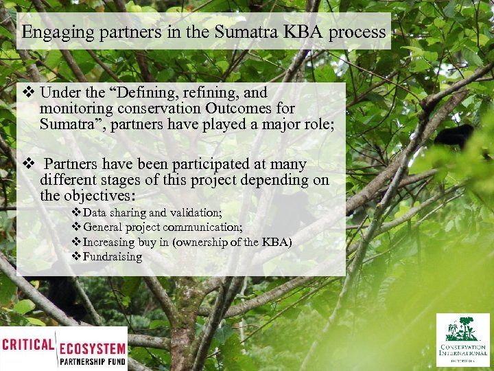 """Engaging partners in the Sumatra KBA process v Under the """"Defining, refining, and monitoring"""