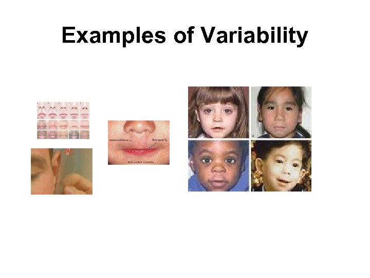 Examples of Variability