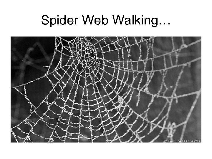 Spider Web Walking…