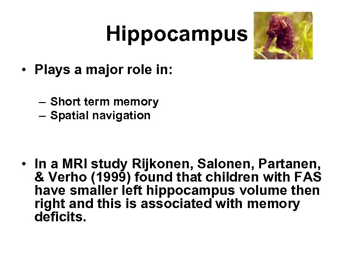 Hippocampus • Plays a major role in: – Short term memory – Spatial navigation