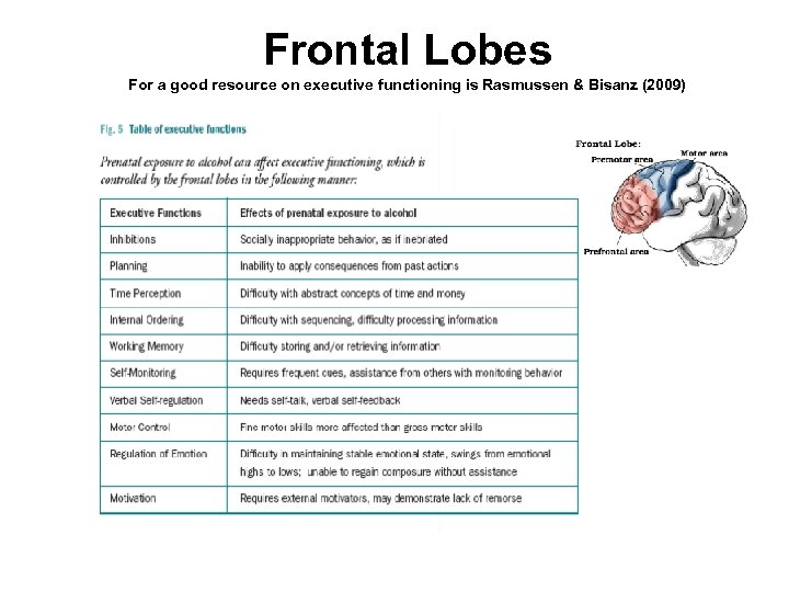 Frontal Lobes For a good resource on executive functioning is Rasmussen & Bisanz (2009)
