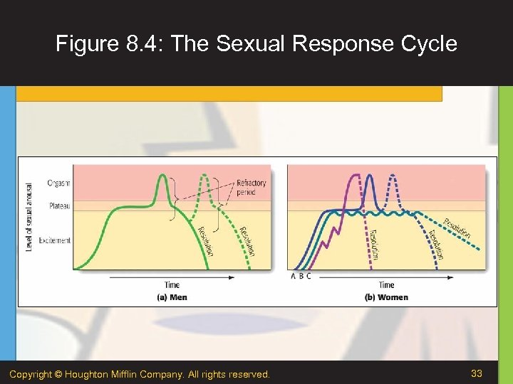 Figure 8. 4: The Sexual Response Cycle Copyright © Houghton Mifflin Company. All rights