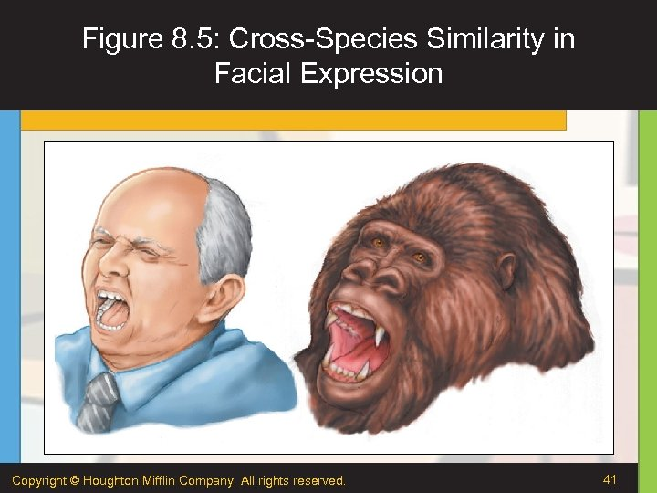 Figure 8. 5: Cross-Species Similarity in Facial Expression Copyright © Houghton Mifflin Company. All