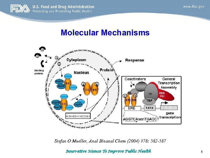 Molecular Mechanisms Stefan O Mueller, Anal Bioanal Chem (2004) 378: 582 -587 Innovative Science