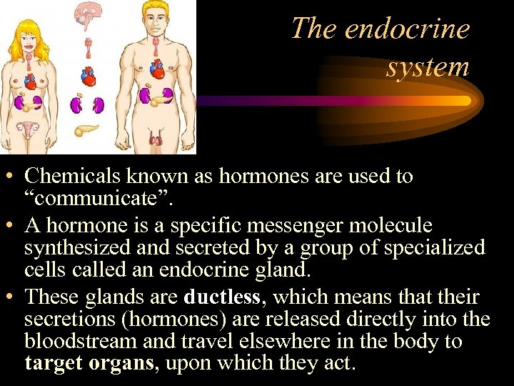 "The endocrine system • Chemicals known as hormones are used to ""communicate"". • A"