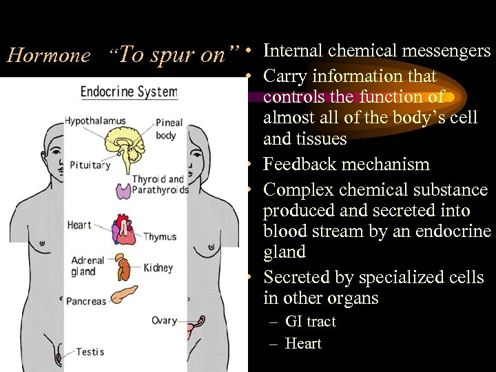 "Hormone ""To spur on"" • Internal chemical messengers • Carry information that controls the"