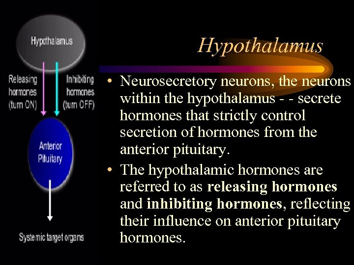 Hypothalamus • Neurosecretory neurons, the neurons within the hypothalamus - - secrete hormones that
