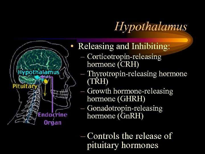 Hypothalamus • Releasing and Inhibiting: – Corticotropin-releasing hormone (CRH) – Thyrotropin-releasing hormone (TRH) –