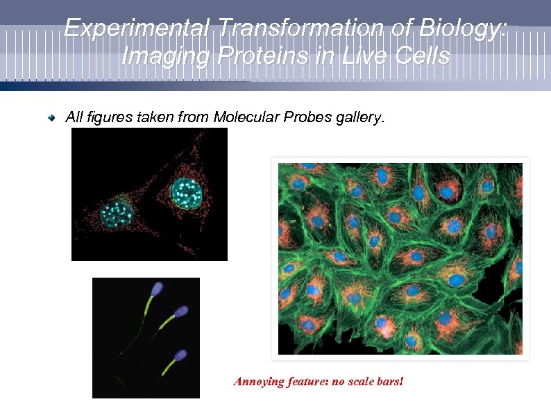 Experimental Transformation of Biology: Imaging Proteins in Live Cells All figures taken from Molecular