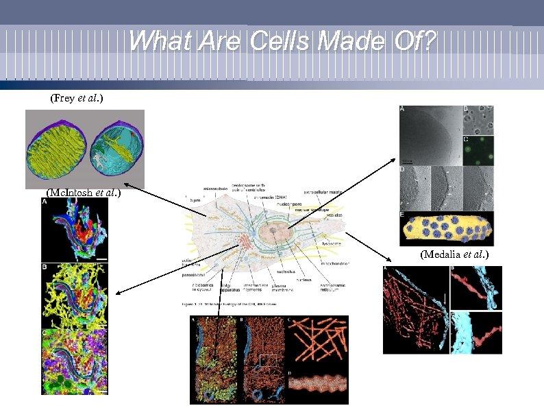 What Are Cells Made Of? (Frey et al. ) (Mc. Intosh et al. )