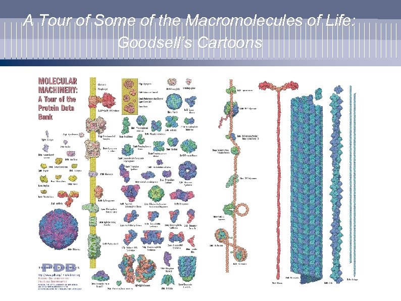 A Tour of Some of the Macromolecules of Life: Goodsell's Cartoons