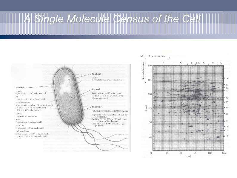 A Single Molecule Census of the Cell