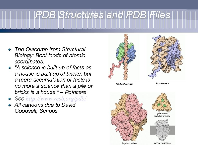 PDB Structures and PDB Files The Outcome from Structural Biology: Boat loads of atomic