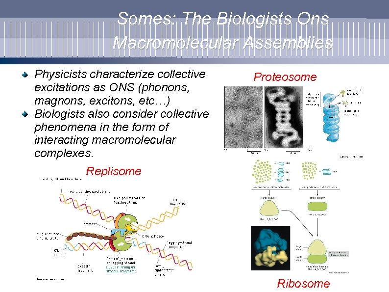 Somes: The Biologists Ons Macromolecular Assemblies Physicists characterize collective excitations as ONS (phonons, magnons,