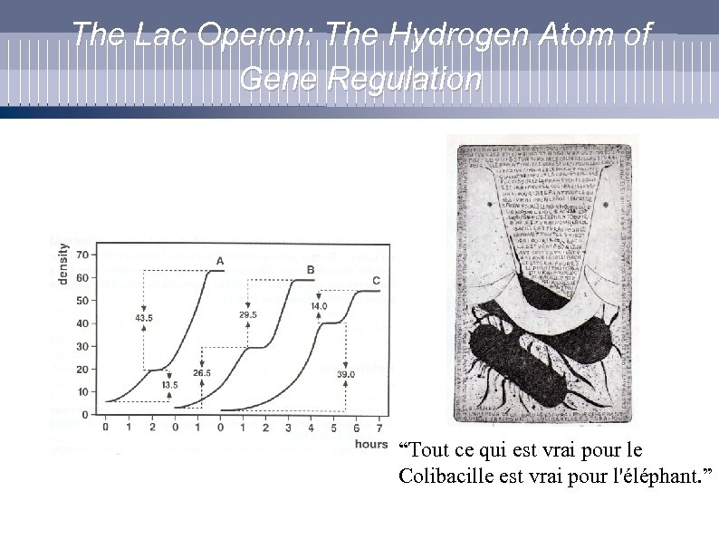"The Lac Operon: The Hydrogen Atom of Gene Regulation ""Tout ce qui est vrai"
