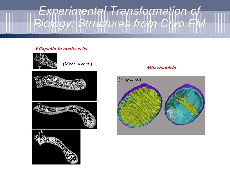 Experimental Transformation of Biology: Structures from Cryo EM Filopodia in motile cells (Medalia et