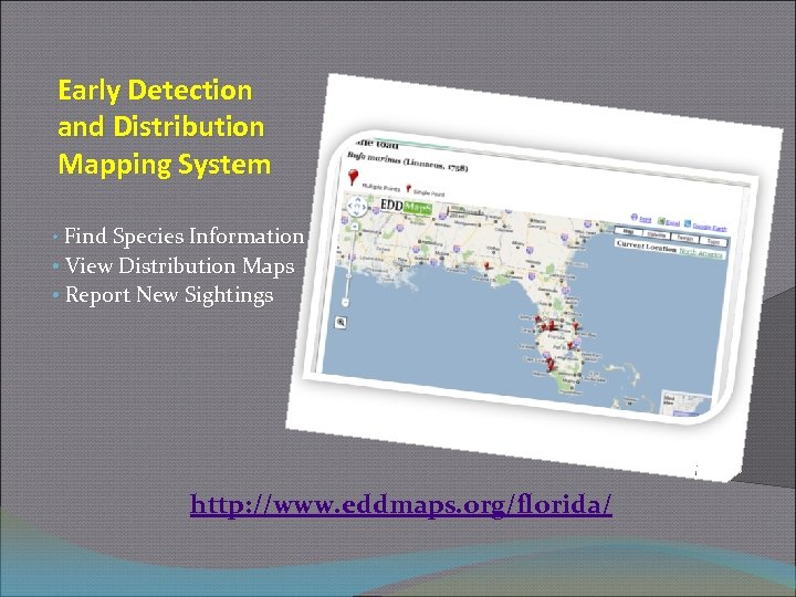 Early Detection and Distribution Mapping System • Find Species Information • View Distribution Maps
