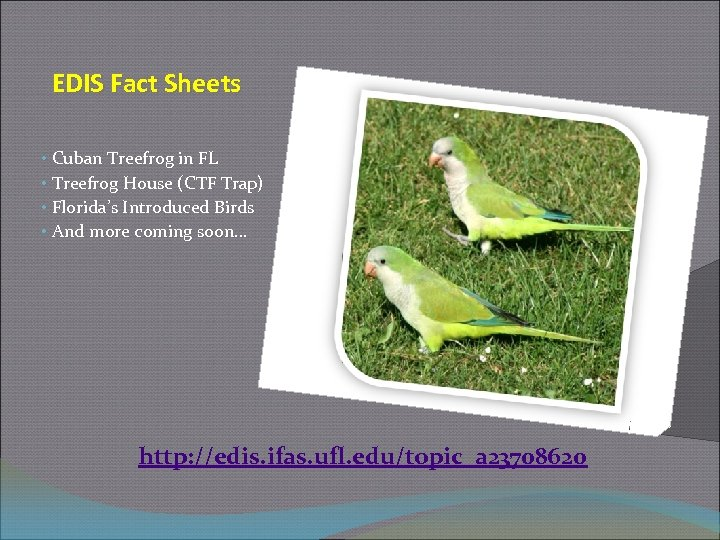 EDIS Fact Sheets • Cuban Treefrog in FL • Treefrog House (CTF Trap) •