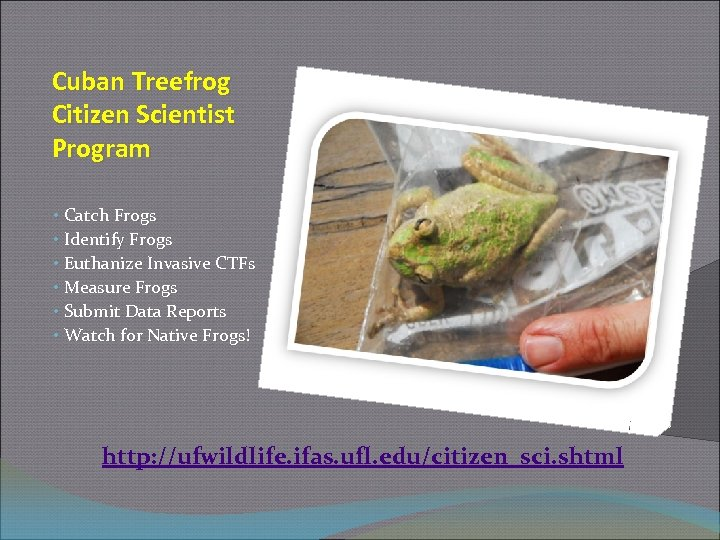Cuban Treefrog Citizen Scientist Program • Catch Frogs • Identify Frogs • Euthanize Invasive