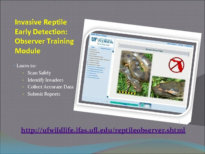 Invasive Reptile Early Detection: Observer Training Module • Learn to: • Scan Safely •