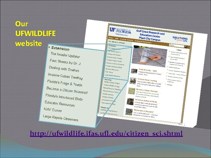 Our UFWILDLIFE website http: //ufwildlife. ifas. ufl. edu/citizen_sci. shtml