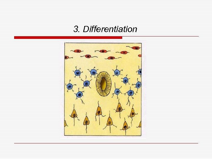 3. Differentiation