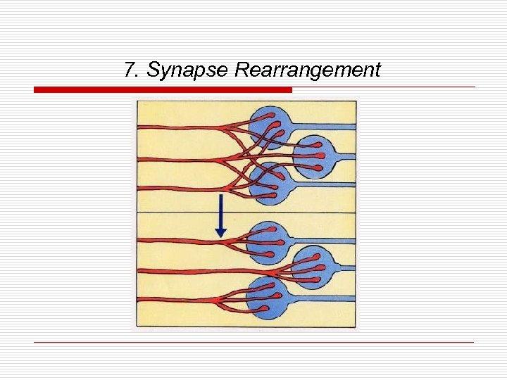 7. Synapse Rearrangement