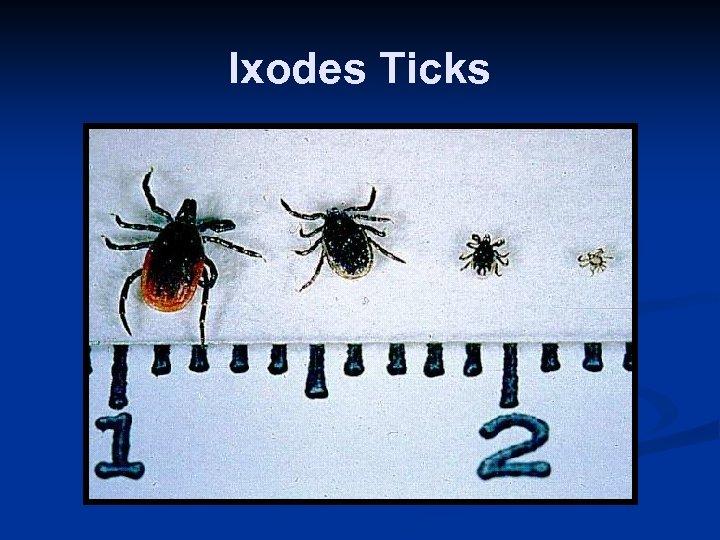 Ixodes Ticks