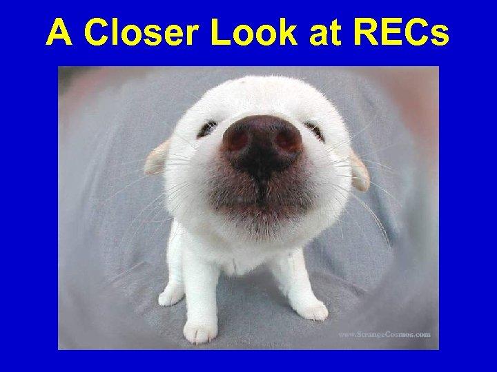 A Closer Look at RECs