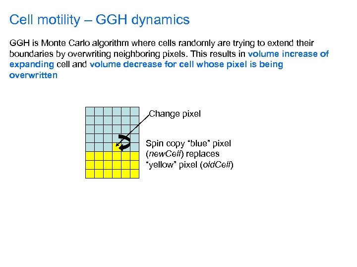 Cell motility – GGH dynamics GGH is Monte Carlo algorithm where cells randomly are