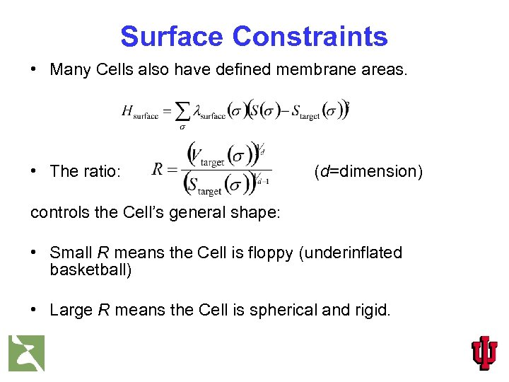 Surface Constraints • Many Cells also have defined membrane areas. • The ratio: (d=dimension)